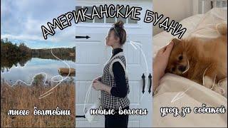 vlog новые волосы уход за собакой болтовня Ariadne Medrea