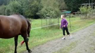 Horse farted and scared itself