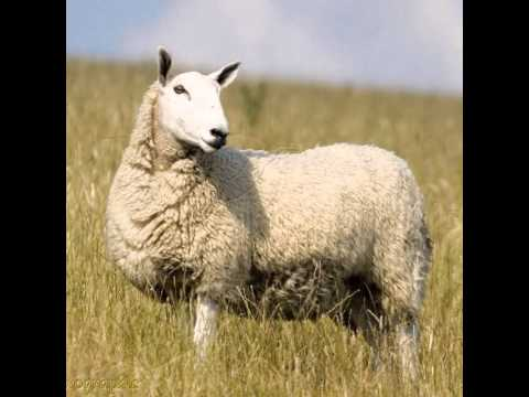 Soulwinning- THE SHEEP, THE COIN AND THE BACKSLIDER