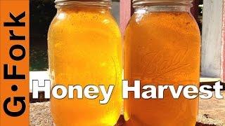 How to Harvest Honey Beekeeping : GardenFork.TV