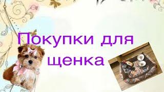 Покупки для щенка/ Всё что нужно щенку/Щенок ши-тцу