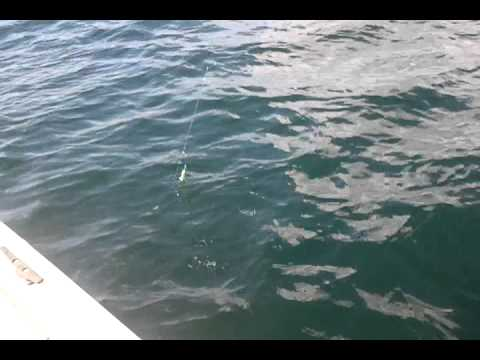 fishing fer the pollack affa leven/methil