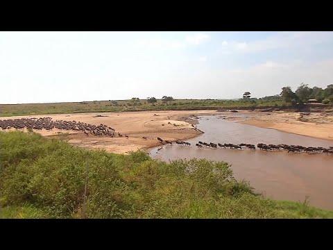 شاهد: السياح غائبون عن -هجرة الحيوانات البرية الكبرى- من تنزانيا إلى كينيا…  - نشر قبل 3 ساعة