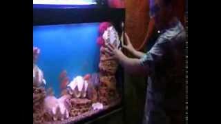 видео Оформление аквариума - стиль