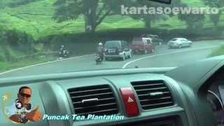 Puncak Tea Plantation - 2013 (Reggae Song)