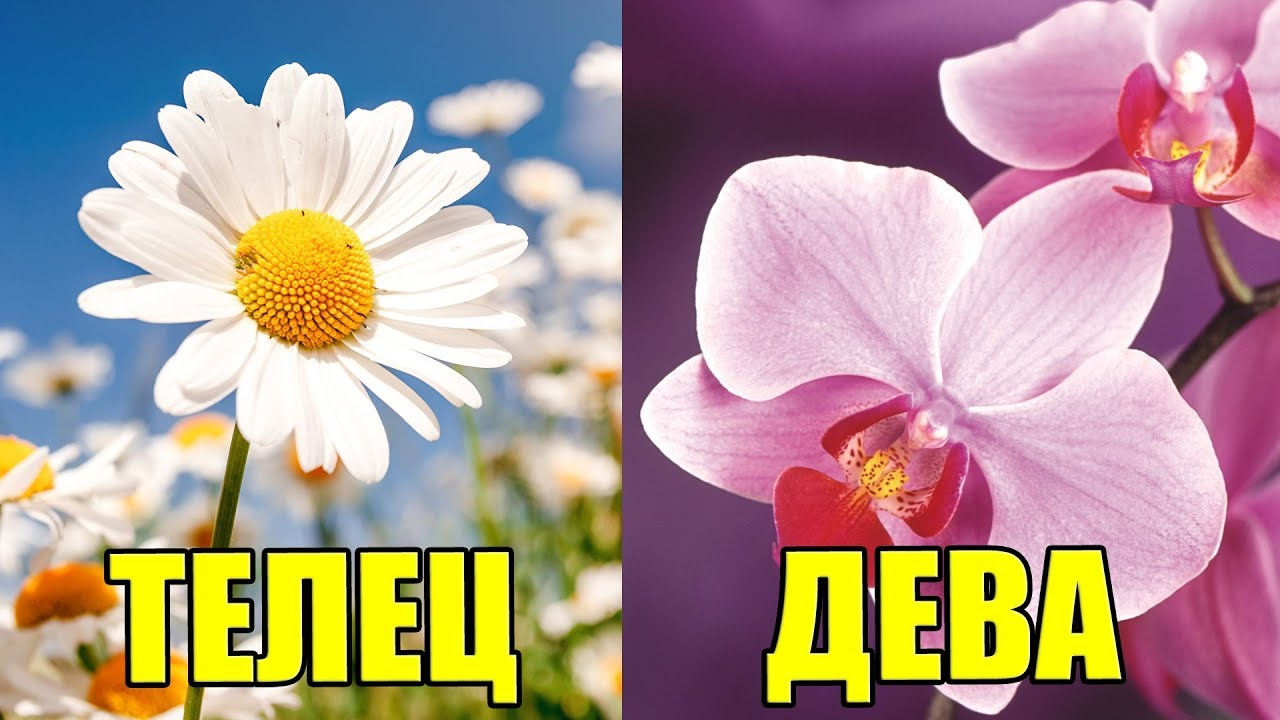Имена по знаку зодиака цветы