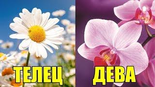 видео Какие цветы дарить на 8 марта по знакам зодиака. Обсуждение на LiveInternet