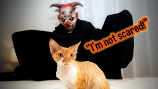 A Halloween Lesson: Cat Meets Scary Ghoul | The Halloween Song