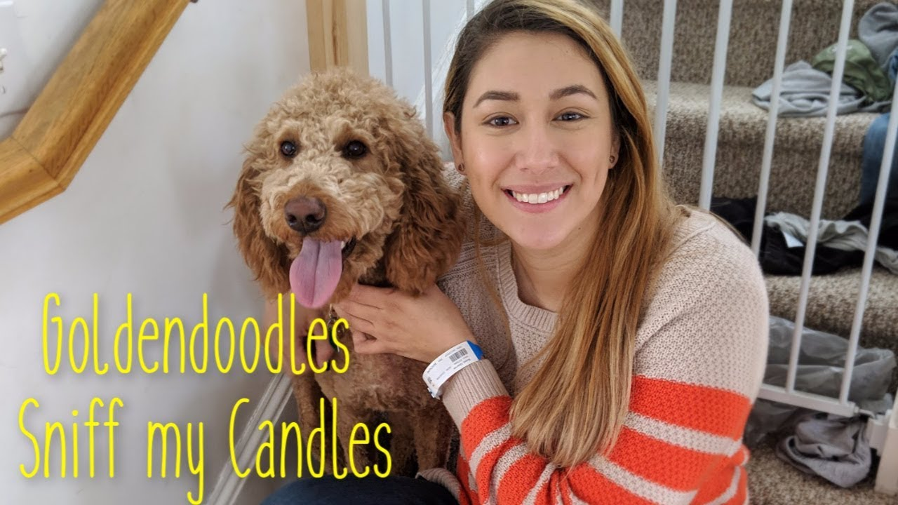 My Goldendoodles Smell My Bath Body Works Candles Haul