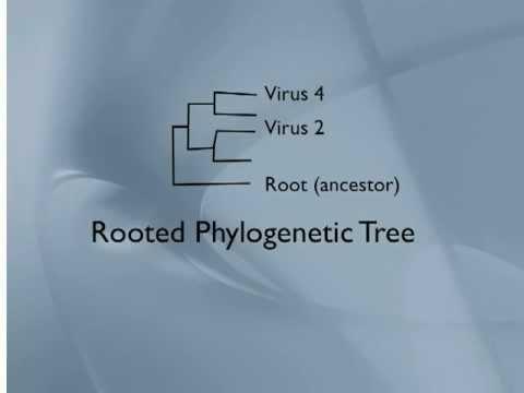 Phylogenetic Trees Viruses