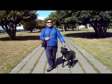 Dog Manager paseando a Negra en Punta Arenas Febrero 2017