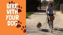 Train Your Dog to Run Next To Your Bicycle
