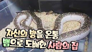 역대급 집 전체를 뱀으로 도배한 최고의 드루이드를 만났습니다.