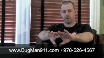 Mosquito Spraying in MA - Advantage Pest Control, Inc