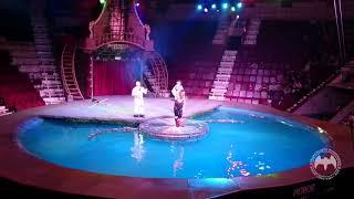Магнитогорск цирк на воде Шевченко шоу