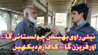"""Perfect buffalo farm in Pakistan"" on YouTube  bufflo farming neliravi farm cholistani cow farm"