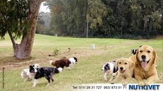 Funny dogs & NUTRIVET zdrava hrana za pse i mačke (10)