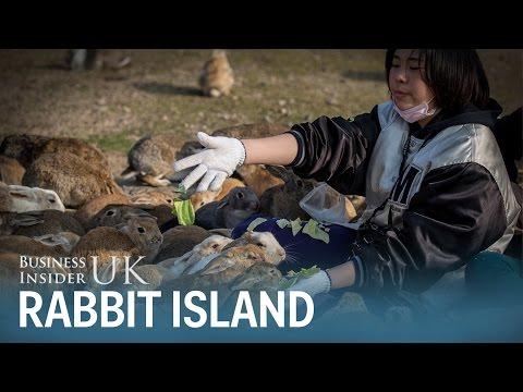 There's an island in Japan that's overrun with hundreds of adorable bunny rabbits