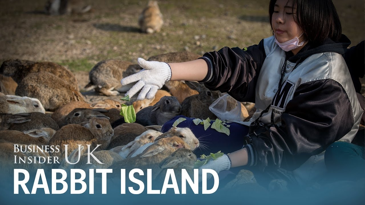 there-s-an-island-in-japan-that-s-overrun-with-hundreds-of-adorable-bunny-rabbits