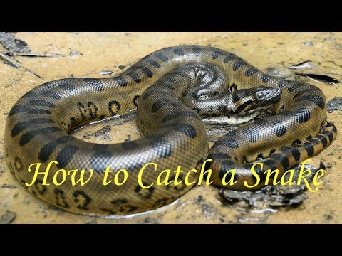 how to catch a snake youtube