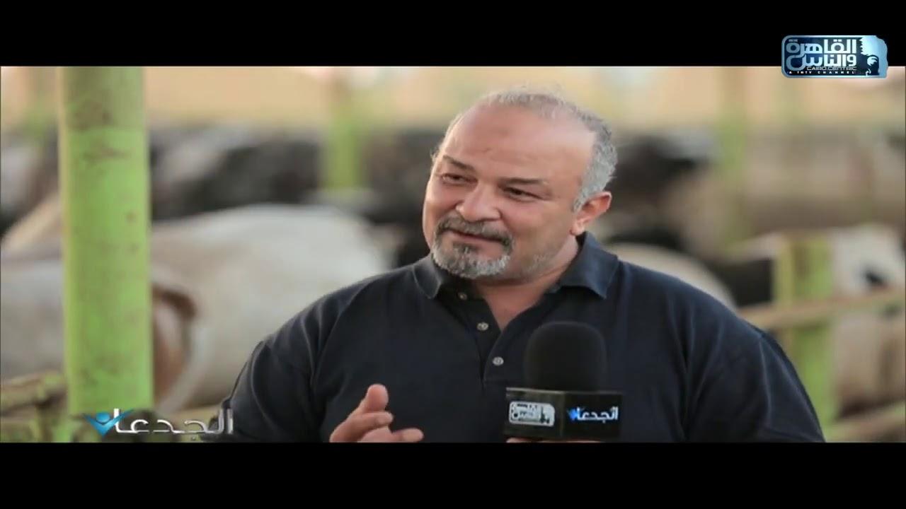 م.أحمد عبد الحميد يشرح الفرق بين العجل البلدي والعجل المستورد وايهما أفضل؟