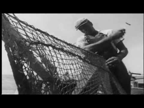 Purse Seine Fishermen