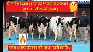 दो गईआं दाम | 1 लाख 80 हजार रुपया | दूध 110 लीटर रोज़ाना | क्या अजय चोपड़ा की बात  खरी होगी ?