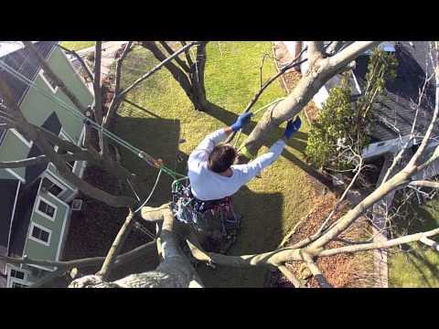 GoPro Tree-Climbing : Redirect