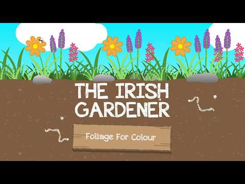 How to Use Foliage plants for Colour in your Garden