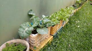 Faça Horta em Casa – Em Vasos