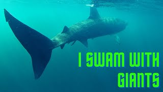 Snorkelling with Basking Sharks in Scotland
