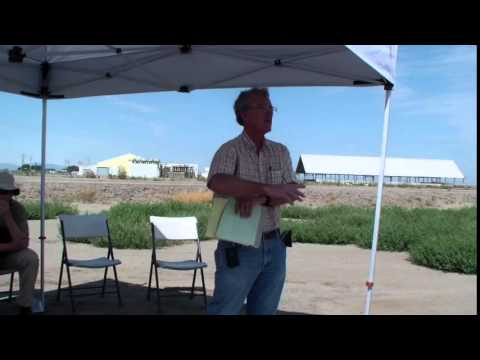 Cotton Disease Mgmt & Research Trial Results- Race 4, Deficit Irrigation, Pima Defoliation