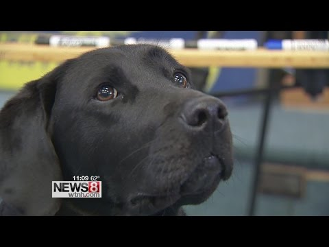 Connecticut State Police electronic storage detection dog in high demand