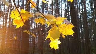 Осенняя природа Севера России  Сертолово  4K