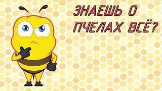 Документальный фильм Молчание пчел/Silence of the Bees (2007)