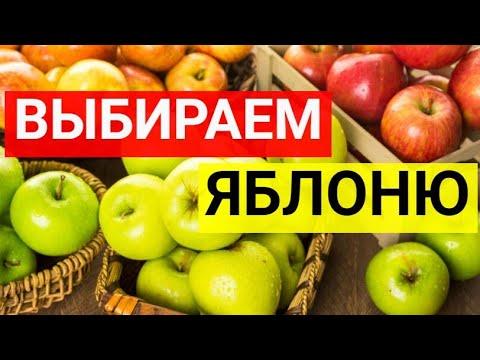 Выбираем яблоню. Лучшие сорта яблонь: Московское ожерелье, Коваленковское, Алые Паруса, Васюган.