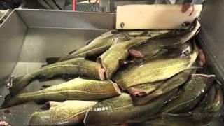 Ramoen Trawler - Catching & Producing Frozen At Sea Cod