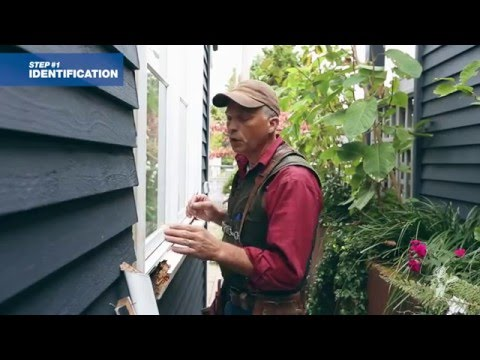 how-to-repair-decayed-window-trim