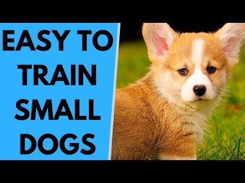 Small Easy to Train Dog Breeds