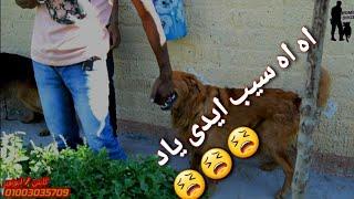 بعد ما عطيته الحقنه مسك ايدى بأسنانه _شكل غضب وهوه بيتاوب وعايز ينام