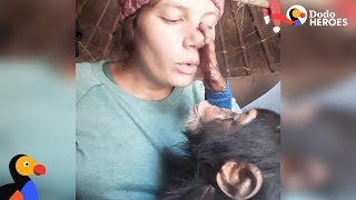 Woman Helps Scared Baby Chimp Feel Safe Again | Dodo Heroes