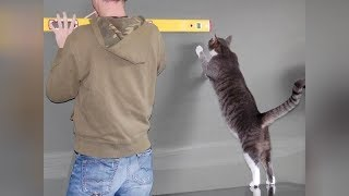 After watching this YOU WILL LAUGH FOREVER! - Funny PETS & ANIMALS compilation