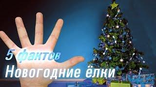 5 фактов - Новогодние елки