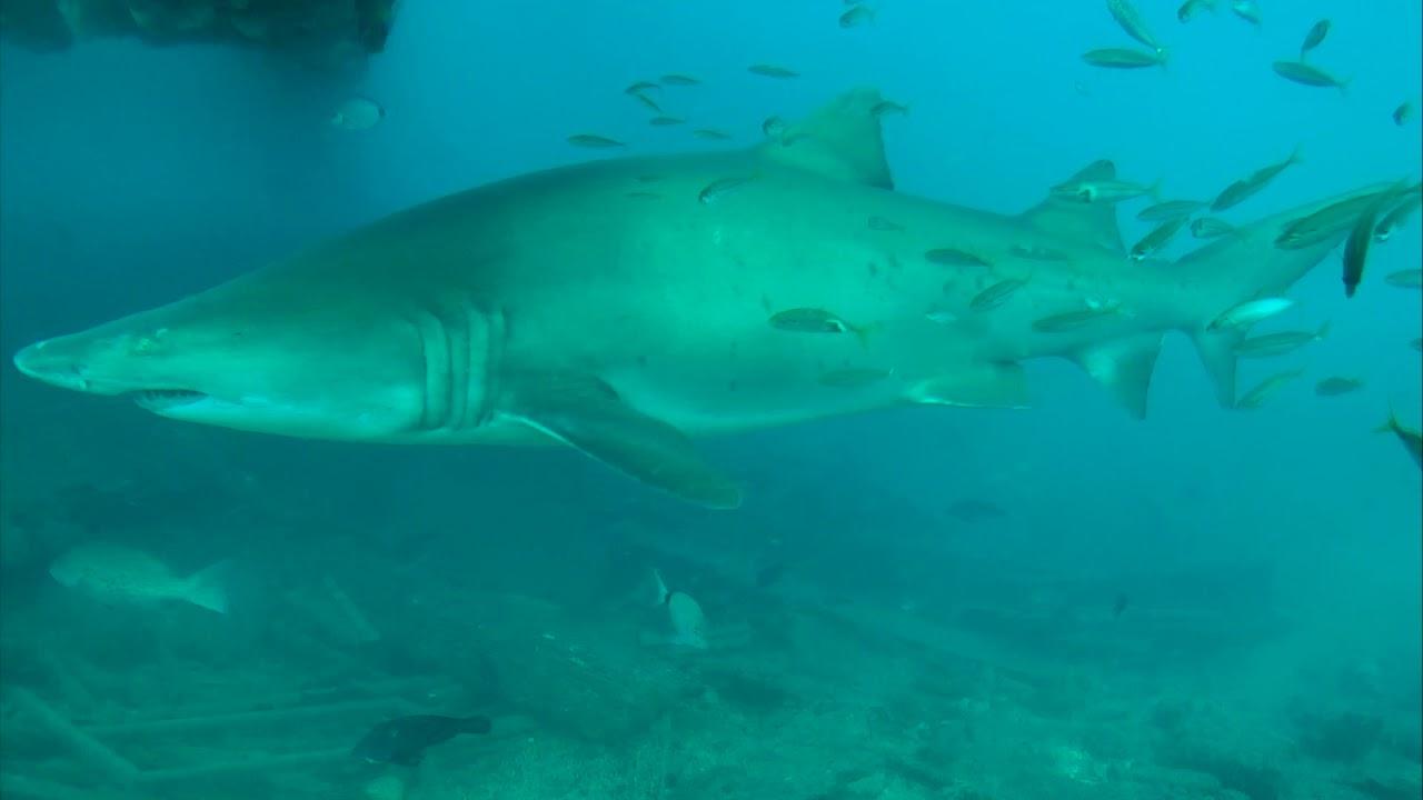 Sharks In The Atlantic Cam 04 21 2018 08 43 22 09 43 23
