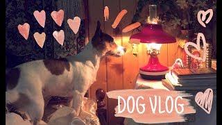 DOG VLOG // Мы с Майлой на даче // Майла играет // посиделки дома