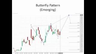 Introduction to Fibonacci Patterns