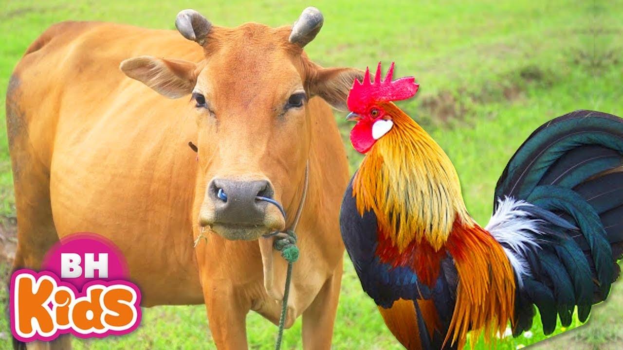 Nhạc Thiếu Nhi Vui Nhộn Hay Nhất ♫ Con Bò ♫ Con Gà Trống – Nhạc Cho Bé Ăn Ngon