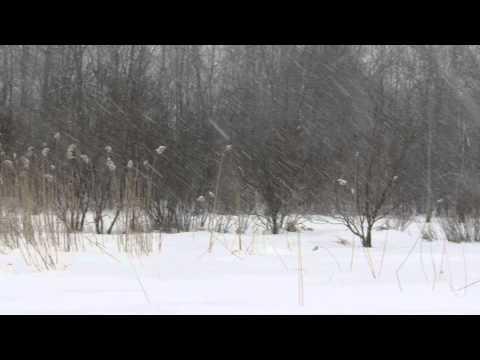 Saratoga Spa State Park - Blizzard: Feb. 8, 2015
