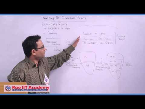Secondary Groups - NEET AIPMT AIIMS Botany Video Lecture [RAO IIT ACADEMY]