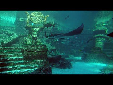 Atlantis der Nordsee - Terra X Doku